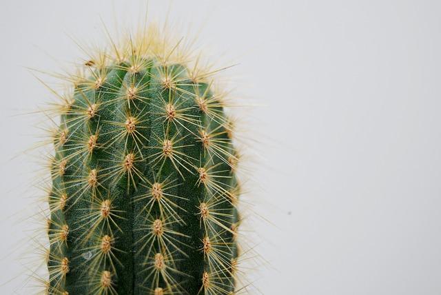 cactus-2262495_640.jpg