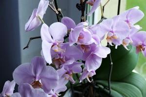 orchid-2667984_640.jpg